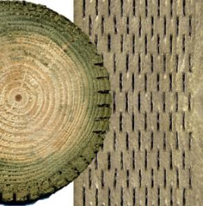 scored-timber